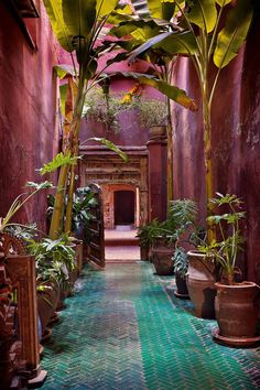 Drama is created in a simple linking passageway at Riad Madani with a brooding shade of magenta plaster twinned with the green tiled floor. Potted bananas interspersed with young [i]Philodendron Bipinnatidum[/i] add hot tropical notes. Moroccan Garden, Moroccan Decor, Tropical Garden, Moroccan Bedroom, Moroccan Lanterns, Moroccan Tiles, Outdoor Plants, Outdoor Spaces, Outdoor Decor