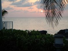 Sunset through the palm fronds at Coconut Bay on Grand Cayman (www.caymanvacationcondo.com)