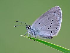 Small Blue Blue, Animals, Animais, Animales, Animaux, Animal, Dieren
