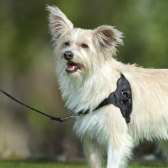 Brilliant!    Top Paw Training Walking Harness for Dogs $23 -- The harness provides gentle guidance and eliminates pulling. This harness gently guides your dog while walking. The harness also helps eliminate pulling to keep your pet comfortable during training and walks.