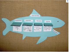 Ocean Food Web Graphic Organizer.