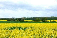 Loire Valley fields of gold.