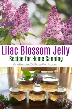 Canning 101 - Lilac Blossom Jelly - One Hundred Dollars a Month Home Canning Recipes, Canning 101, Jelly Recipes, Jam Recipes, Cooker Recipes, Canning Food Preservation, Preserving Food, Flower Food, Jelly Flower