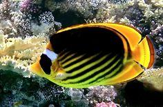 fotografías-del-fondo-marino-peces-de-colores-arrecifes-y-corales-en-los-oceanos-