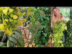 How I Grow Massive Pothos & Philodendron Vines: Tips You Need to Know! Pothos Plant Care, Pothos Vine, Hanging Plants, Indoor Plants, Indoor Gardening, Pathos Plant, Marble Queen Pothos, Neon Pothos, House Plant Care