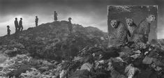 Iconic Animals 'Return' to Lands They Once Roamed | by Alexa Keefe | Wasteland with Cheetahs & Children