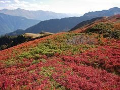 Autumn in the French Alps. Come in September on our tour and see these colors.  www.frenchalpsandprovencetours.com