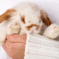 Cuidados para conejos recién nacidos #ExpertoAnimal #MundoAnimal #ReinoAnimal #Animales #Naturaleza #AnimalesTiernos #Ternura #Conejos #Cachorros