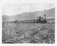 Waimanalo, Oahu, Hawaii. 1900.