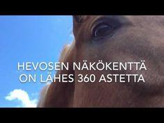 Hevosen näkökenttä – mw hevospalvelut