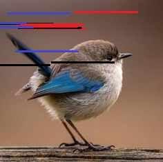 More memes, funny videos and pics on Bizarre Animals, Blue Heron, Bird Pictures, Unique Image, Dance Videos, Bird Species, Wild Birds, Magpie, Funny Videos