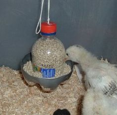 Bird feeder from plastic bottle. *Could use this for wild birds too