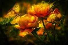 Flowers, Butterfly