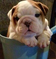 Pup in a pot