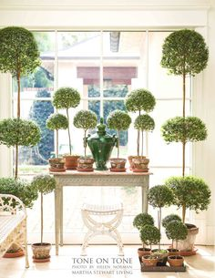 Topiary from Loi of Tone on Tone blog, whose home is in the current Martha Stewart Living magazine...