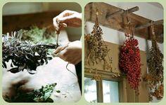 """Защитить себя и свой дом при помощи растений.   Познавательный сайт ,,1000 мелочей"""""""
