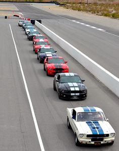 A group of Shelby Mustangs about to go on track at Spring Mountain. Have you ever seen anything more beautiful? Mustang Gt500, Mustang Cars, Ford Mustang Gt, Ford Gt, My Dream Car, Dream Cars, Ford Shelby, Shelby Gt500, Car Man Cave