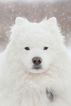 Snow Portrait by Timpy, via Flickr