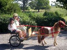 Robin Samson from Heart of Wisdom driving her miniature horse cart with her granddaughters.  Looks so much fun!