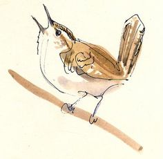 Cathy Johnson Fine Art Galleries: Wren Sketch:  Check out some of her workshop videos, you'll be inspired to get out the sketchbook and watercolors
