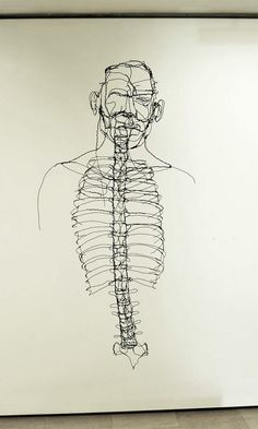 Anatomy study, single line drawing