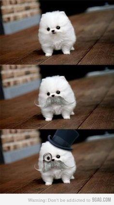 Haha co cute!