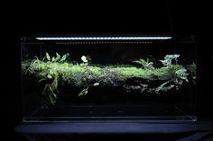 Branch vivarium - Hygrolon Updated by Mikaels orchids, via Flickr
