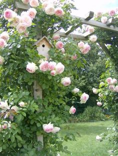 rose pergola ~ I would place a bench underneath it.  You could just affix a ladder over top...