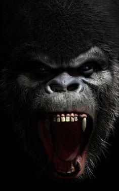 Angry Silverback Gorilla Drawing Roaring gorilla - viewing