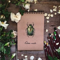 Object Photography, Creative Photography, Herbal Magic, Witch Decor, Botanical Tattoo, Magic Words, Pin Art, Bullet Journal, Folk