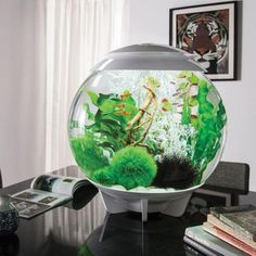 54 Best Small Fish Tank Ideas Images In 2019 Aquarium