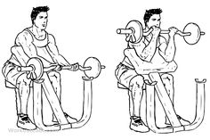 Ez-bar preacher curls is a gym work out exercise that targets biceps and also involves forearms. Arm Workout For Mass, Gym Workout Chart, Workout Guide, Big Biceps, Back And Biceps, Best Muscle Gainer, Preacher Curls, Gym Images, Captain America Civil War