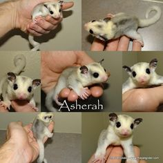 Asherah is a beautiful mosaic lady who is now up on our website!  Click through for information on how to bring this cutie home.