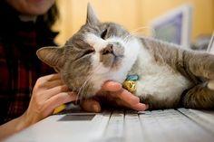 【チョット】猫のせいでパソコンができない【ドイテ】 - NAVER まとめ
