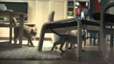 ikea cat commercial - YouTube