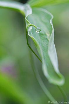 Waterdrop | por Photography by Markus Lenzen