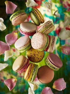 Sweet Spring Garden of Macarons by Pierre Hermé Paris Part 1