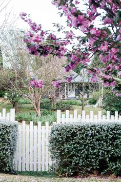 The front facade of a 1910 weatherboard cottage featuring white French doors. In the front yard stands a cherry blossom tree and hedge of teucrium | Photography: Abbie Melle
