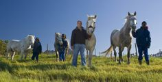 The 'Green brigade' of Waterkloof Wine Estate (bio-dynamic farming) Percheron Horses, Somerset West, Cape Town South Africa, Our Town, Mountain Range, Four Legged, Wine, History, Farming