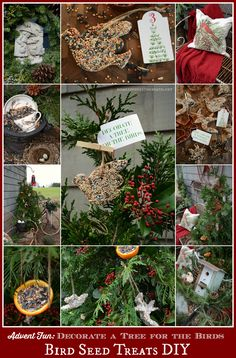 Advent Fun Bird Seed Treats DIY