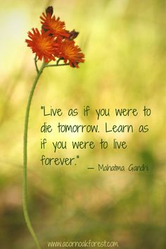 - Live as if you were to die tomorrow. Learn as if you were to live forever. - Gandhi. Mindful Life