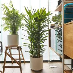 Buy plants for a meeting room online Buy Plants, Indoor Plants, Best Office Plants, Interior Plants, Interior Design, Welcome To The Jungle, Plants Online, Apartment Furniture, House Plants