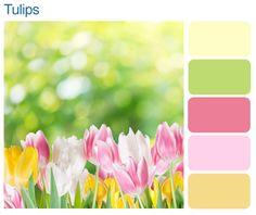 yellow pink green color palette - Google Search