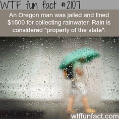 WTF Fun Facts is updated daily with interesting & funny random facts. We post about health, celebs/people, places, animals, history information and much more. New facts all day - every day! Wtf Fun Facts, True Facts, Funny Facts, Random Facts, Strange Facts, Crazy Facts, Random Stuff, Odd Facts, Funny Memes