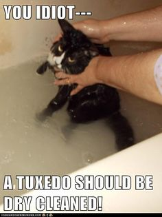 You idiot, a tuxedo should be dry cleaned!