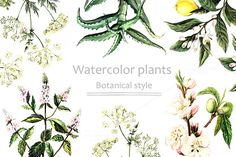 Check out Watercolor plants in botanical style by AnnaY on Creative Market