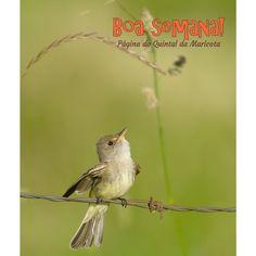 """Palavras são pássaros. / Voaram! / Não nos pertencem mais.  [""""Pássaros libertos"""", Helena Kolody]"""