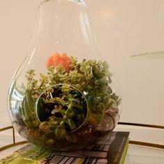 terariums to pin | Bonsai terrariums by Vernon Caldera for BHLDN. www.VernonCaldera.com