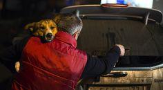 Newsela | Animal-loving U.S. athletes take a shine to Sochi's stray dogs