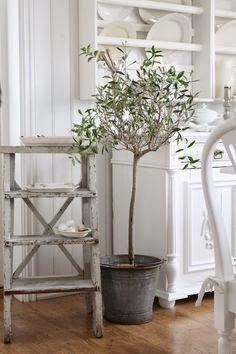 PAWIA PRACOWNIA: Drzewko oliwne